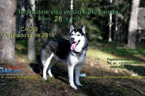 Tarptautinė visų veislių šunų paroda